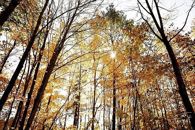 #couleurs #canada #autumn #tree #trees #naturephotography #nature #naturelover #forest #forestphotography @canada @explorecanada @imagesofcanada #instalife #igersfrance #igerssuisse